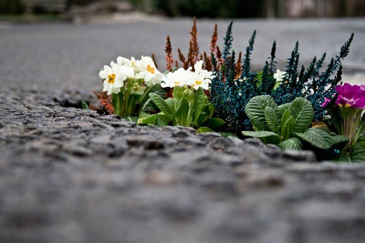 Pothole_garden_01