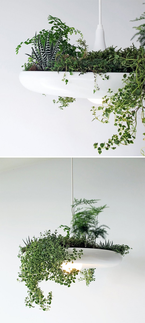 Planter-light