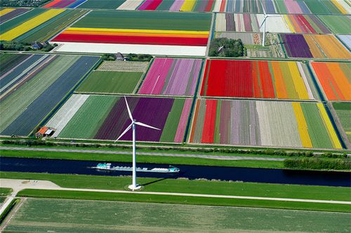 Patchwork-tulip-fields