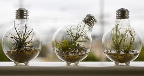Light-bulb-planter