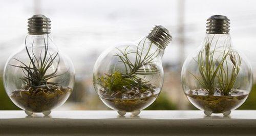 Light-bulb-planter